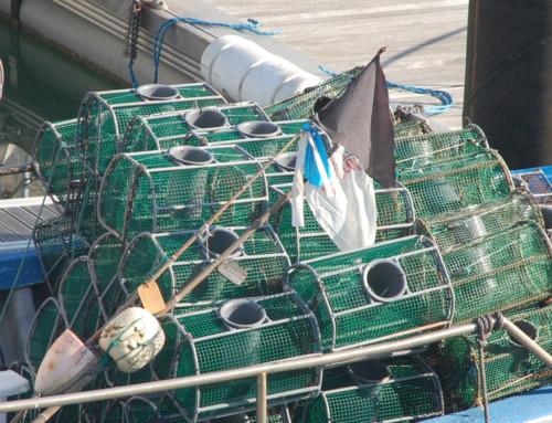 Interview with MIREN GARMENDIA , Secretary of «Organización de productores de pesca de bajura de Gipuzkoa» (OPEGUI)